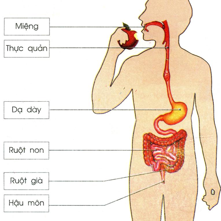 Tác dụng của trà linh chi với hệ thần kinh